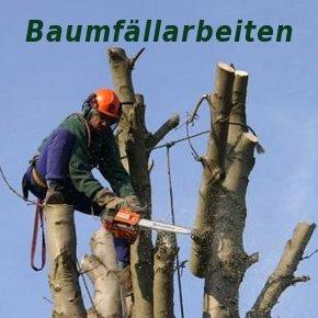 Baumfällarbeiten am Helmholtzplatz