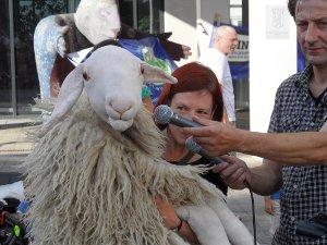 Mauerpark-Demo mit Schafspuppe