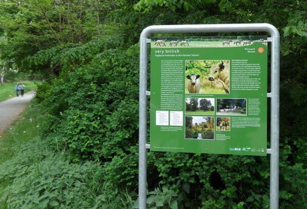 Informationstafeln: Very british: Parkrinder in Karower Rieselfeldlandschaft
