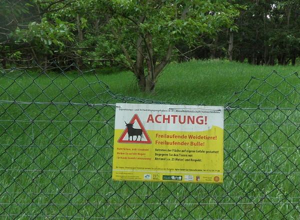 Achtung! Freilaufende Weidetiere - Freilaufender Bulle