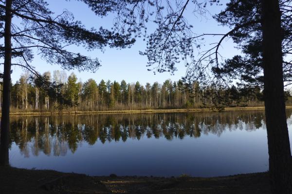 Wasserreiches Land: Waldspiegelung  - Foto Anna Geisler