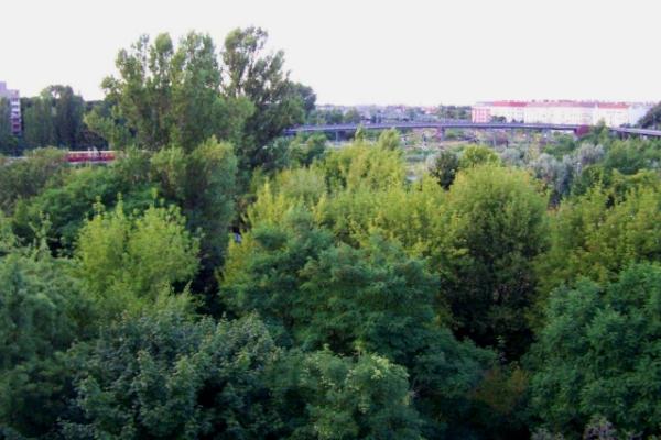 Mauerparkblick im August aus dem Wohnhaus der DEGEWO an der Gleimstrasse