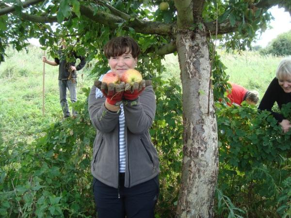 Apfelernte am Köppchensee - Foto: NABU, Gehring