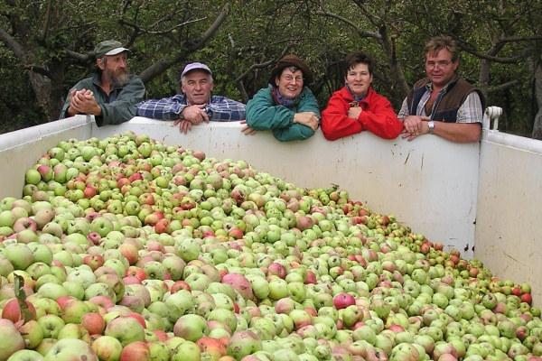 Apfelernte am Köppchensee: zufriedene Helfer - Foto: NABU, Scharon