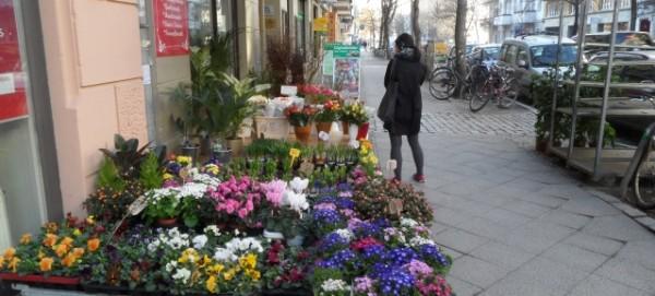Bunte Frühlingsblumenauslage in der Kopenhagener Strasse