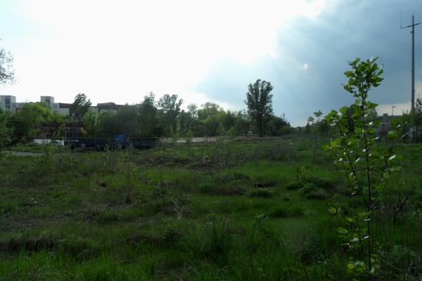 Mauerpark: Nordfläche im Frühligsgrün