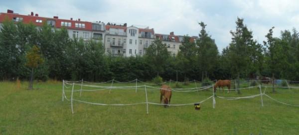 Mauerpark: Pferdekoppel am Moritzhof