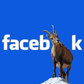 facebock des Monats