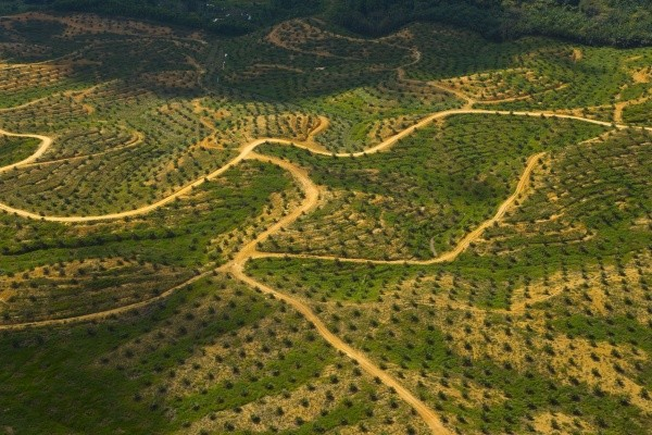 Entwaldung: Palmöl Plantage