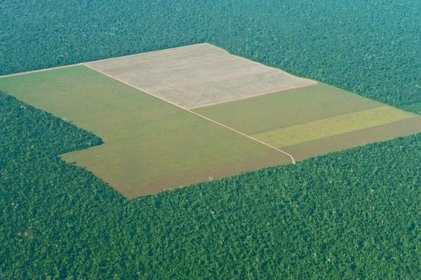 Entwaldungsfront im Amazonas Regenwald
