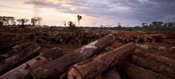 Entwaldung in der Congo Basin Region