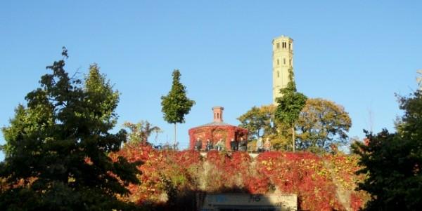Weinbau in Prenzlauer Berg - der steilste Südhang am Wasserturm