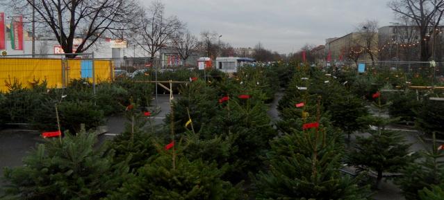 Weihnachtsbäume kaufen in Berlin
