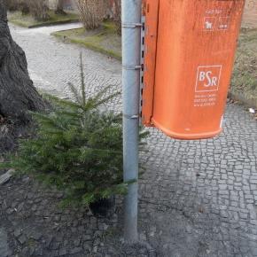 BSR Weihnachtsbaumabfuhr