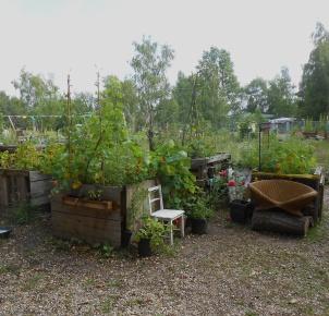 Urban Gardening im Mauerpark