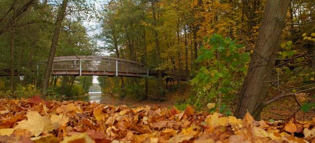 Werbellinkanal im Herbst