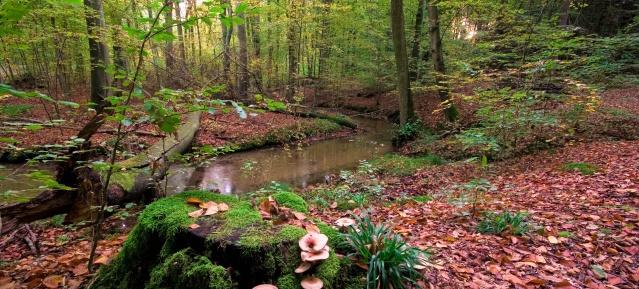 Waldwanderungen im Barnim