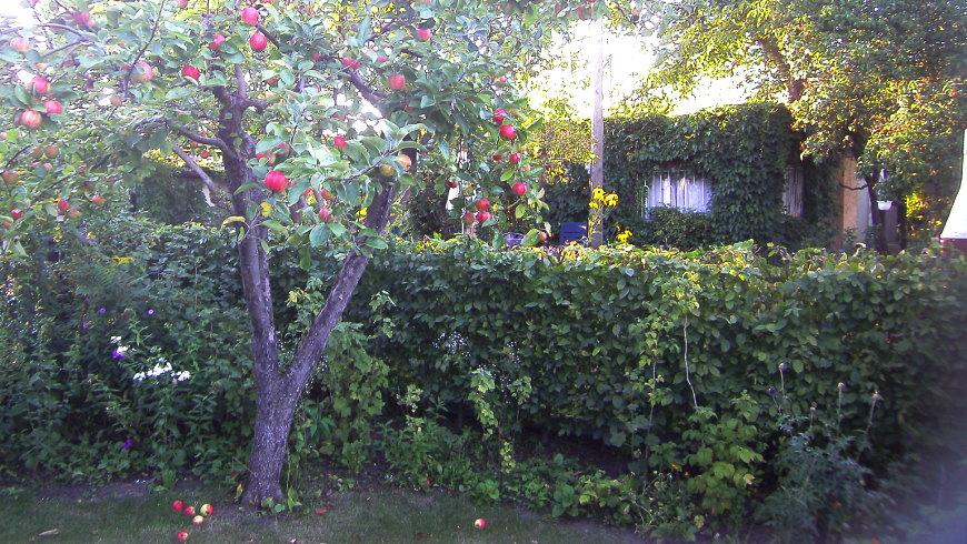 120 Jahre Kleingartenanlage Bornholm II e.V. am 3-4.9.2016