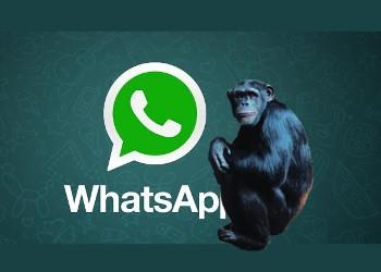 Whats Ape