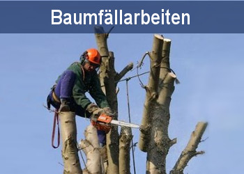 Baumfällarbeiten Pankow