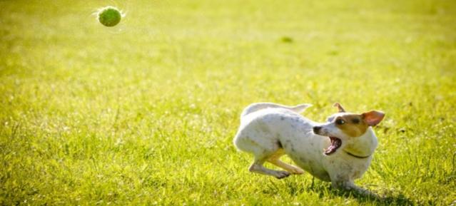 Hundetraining mit Ball