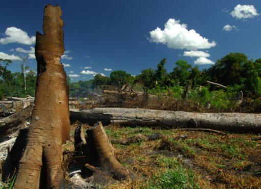 Abgebrannter Wald in Brasilien - Foto: