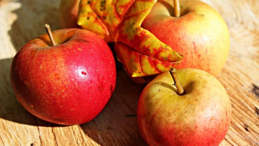 Herbstzeit - Apfelzeit