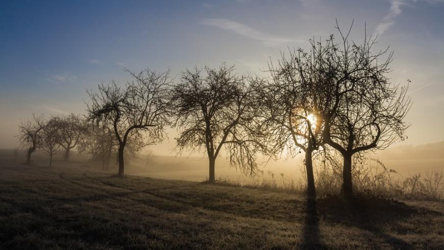 Obstbäume in der Barnimer Feldmark