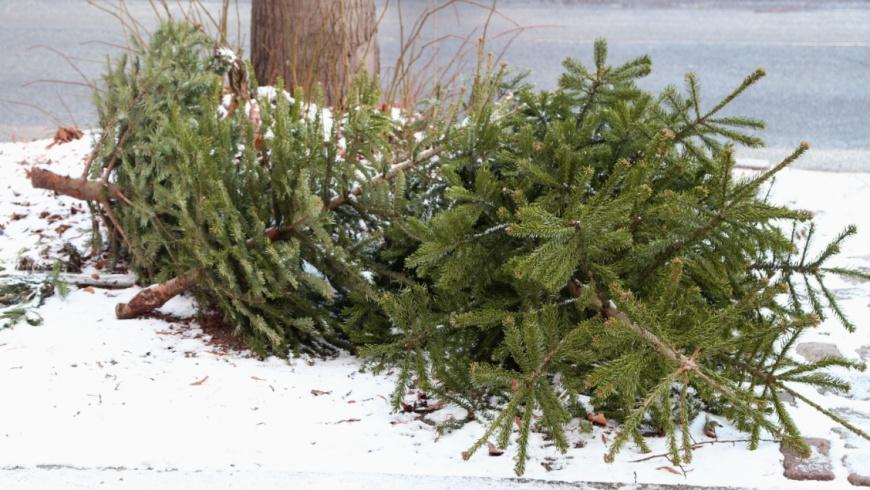 Weihnachtsbaumabfuhr