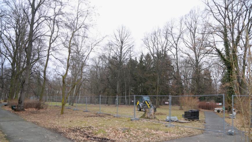 Fraenkelpark in Lankwitz vor Abholzung