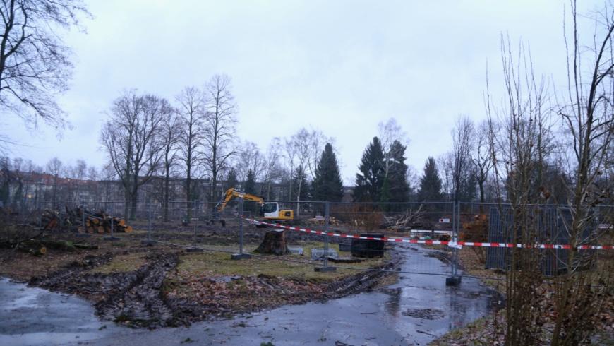 Fraenkelpark in Lankwitz nach Abholzung