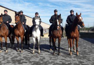 Bundespolizei: Reiterstaffel