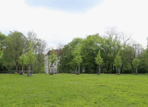 Neue Bäume auf dem Brennerberg
