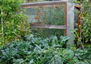 Kleingarten mit Selbstversorgung: Tomaten und Kohl