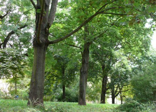 Bäume im Innenhof