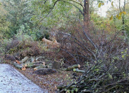 Sturmschäden in Parks und Gärten