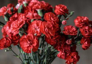 Rote Nelken
