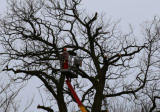 Baumarbeiten und Kronenrückschnitt