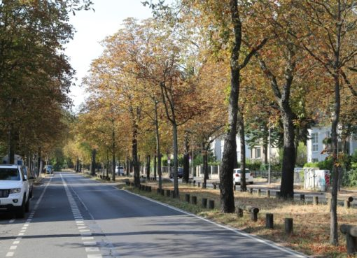 Kastanien in der Heinrich-Mann-Straße