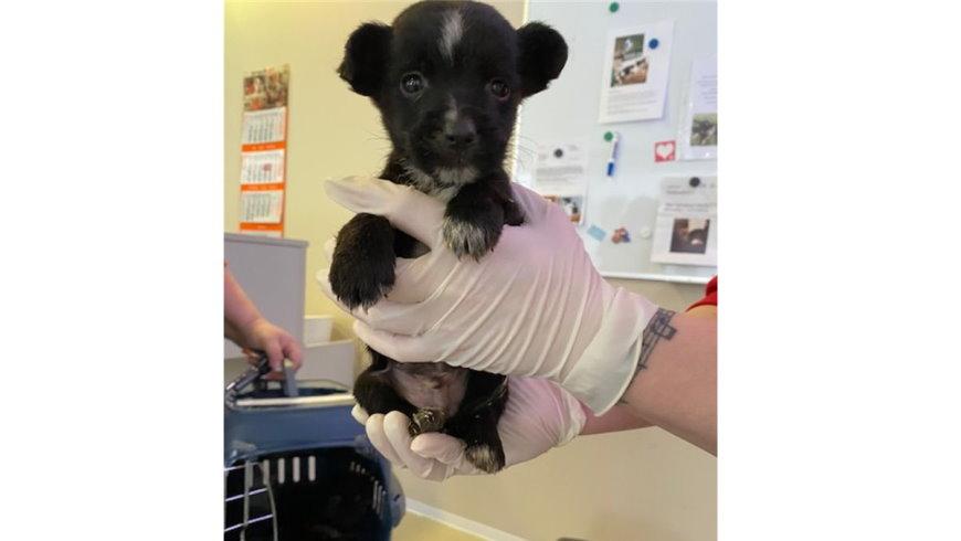 Beschlagnahmter Hundewelpe