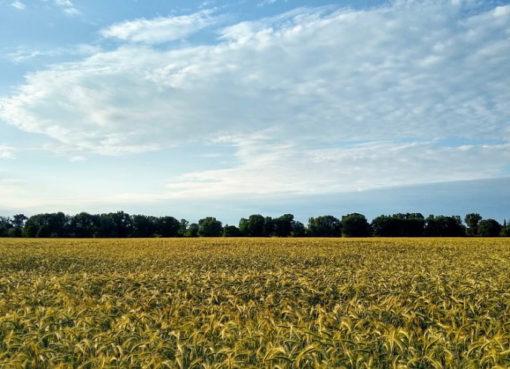 Feld bei Karow