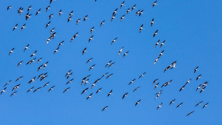 Zugvögel auf dem Weg nach Süden